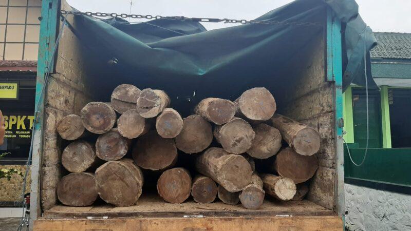 Polisi Ringkus 3 Pencuri Kayu Hutan di Ponorogo