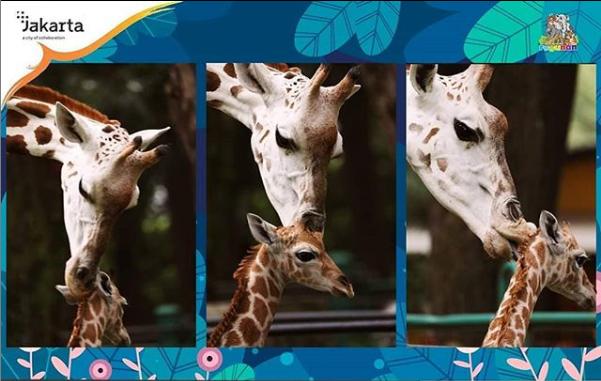 Wahai Yang Rindu Piknik, Kebun Binatang Ragunan Gelar Wisata Virtual, Cek Tanggalnya!
