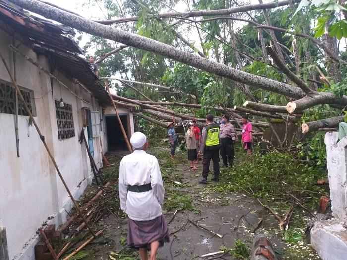 Cuaca Esktrem di Blitar, 11 Rumah dan 1 Mobil Rusak Tertimpa Pohon Tumbang