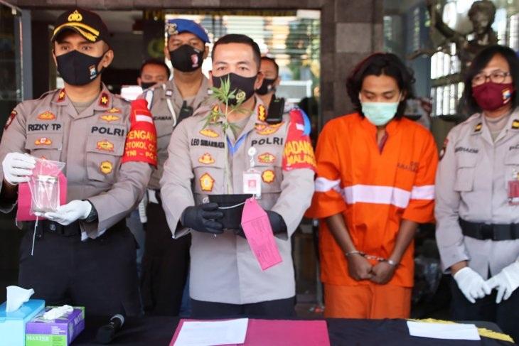 Tanam Ganja di Indekos, Mahasiswa Kota Malang Ditangkap Polisi