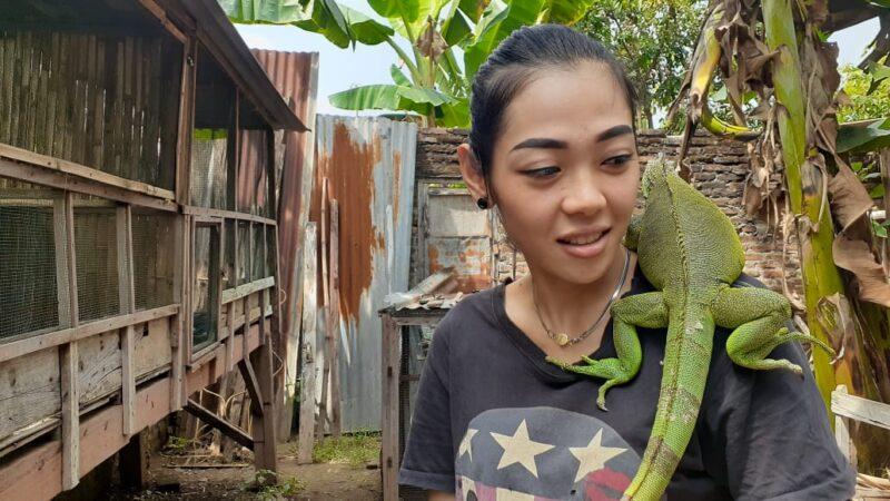 Anti Mainstream! Cewek di Madiun Ini Sukses Beternak Iguana