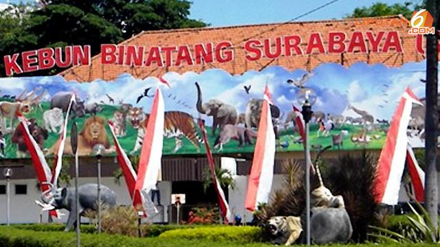 Kebun Binatang Surabaya Dibuka Lagi, Tapi Tidak Untuk Balita dan Lansia
