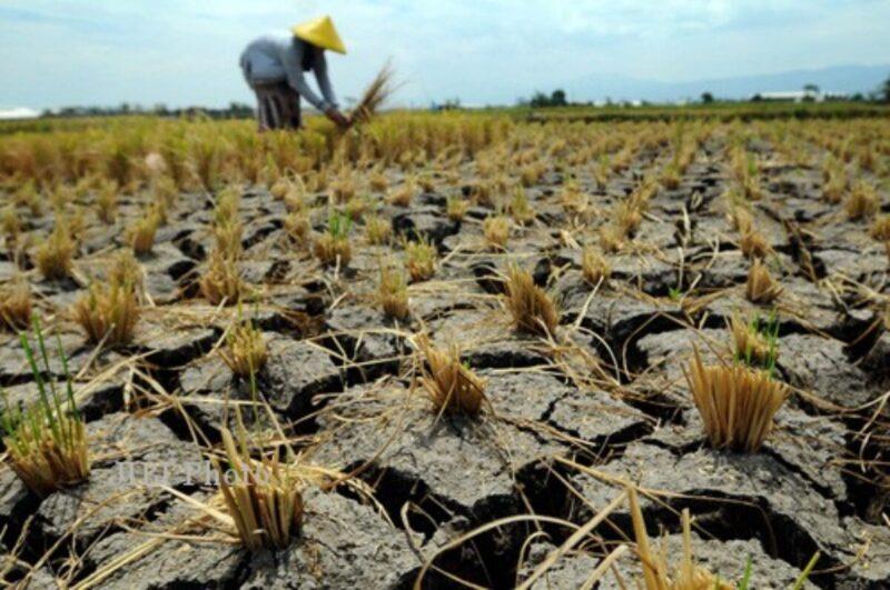 Kekeringan di Bojonegoro, 5 Desa Minta Bantuan Air Bersih