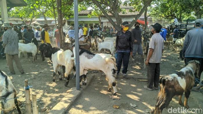 Penjualan Hewan Kurban di Ponorogo Jeblok, Harganya Pun Anjlok