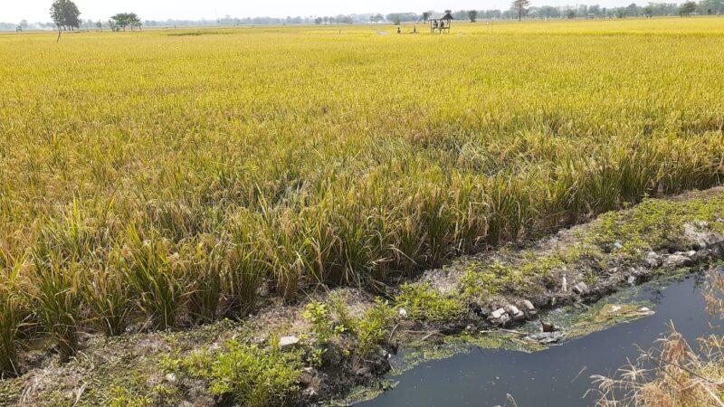 Petani Madiun Keluhkan Kerusakan Saluran Irigasi