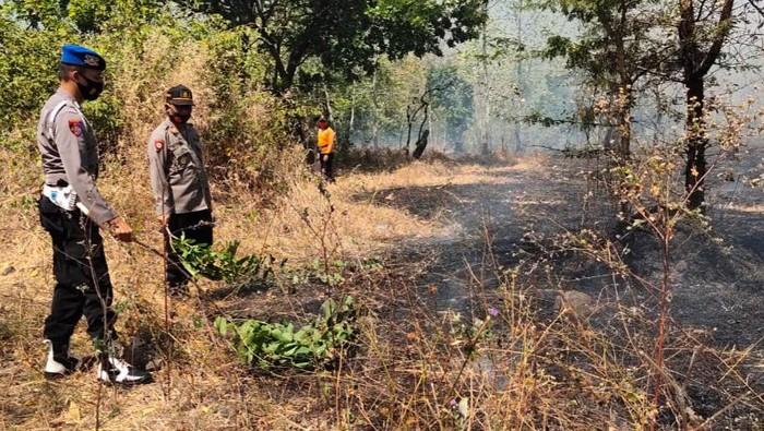 Hutan Baluran Situbondo Kebakaran, Diduga Karena Puntung Rokok yang Dibuang Sembarangan