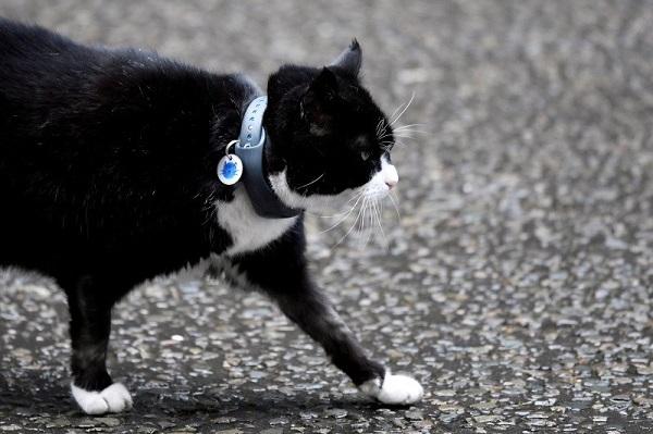 4,5 Tahun Memburu Tikus, Kucing di Kantor Kemlu Inggris Pensiun