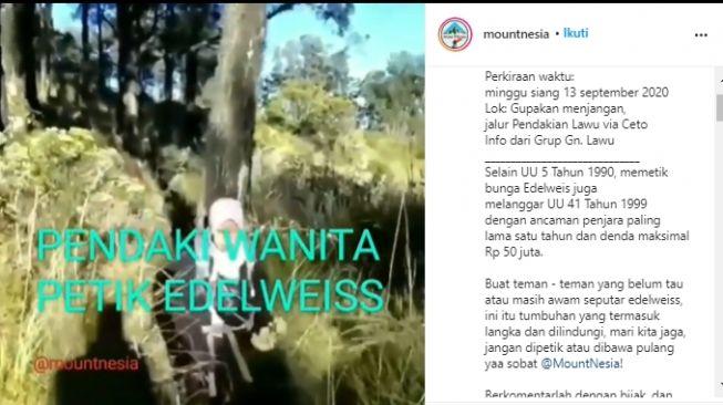 Dibully Netizen karena Petik Edelweis di Gunung Lawu, Pendaki Ini Akhirnya Minta Maaf
