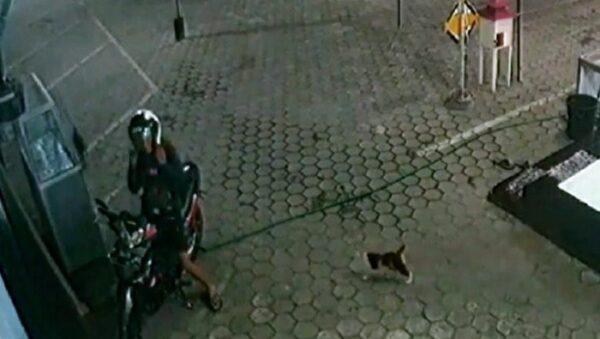 Viral Pemuda di Bondowoso Ini Tiap Malam Beri Makan Kucing Liar
