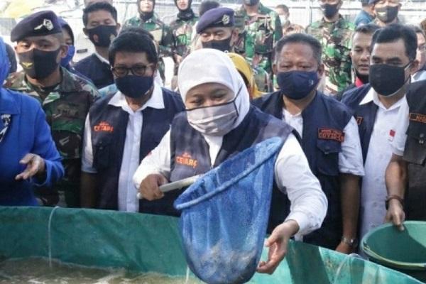 Diterpa Pandemi, Ekspor Udang Jatim Malah Naik 3,3%