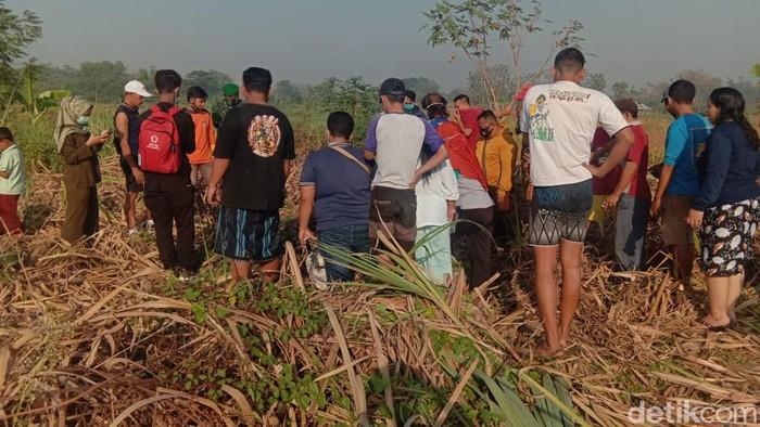 Mayat Wanita Tanpa Identitas Ditemukan di Ladang Tebu Mojokerto, Tinggal Kulit dan Tulang