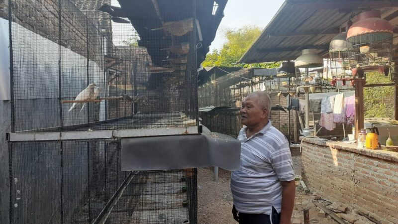 Keren! Purnawirawan TNI Asal Madiun Ini Sukses Ternak Burung Perkutut