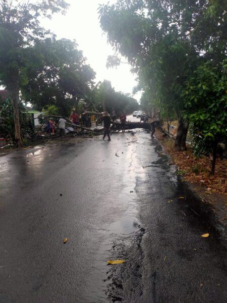 Hujan Pertama, Pohon Tumbang di Madiun Tutup Akses Jalan