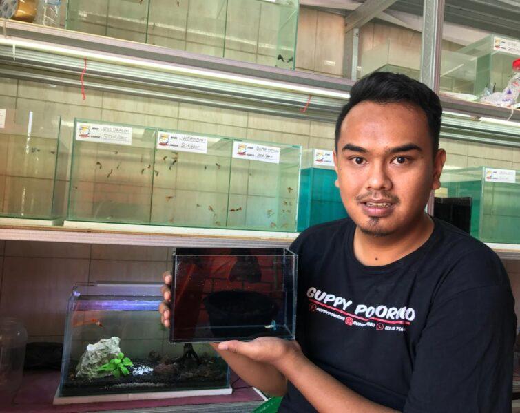 Sukses Berbisnis Ikan Guppy, Pemuda Ini Raup Omzet Hingga Rp15 Juta Sebulan