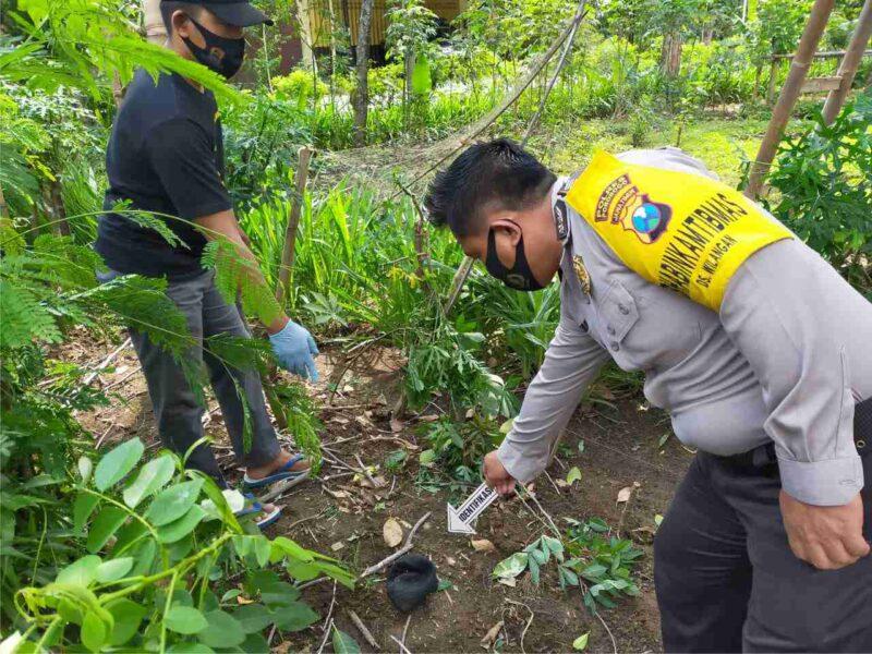 Nahas, Petani Lansia di Ponorogo Meninggal Setelah Jatuh dari Pohon Nangka