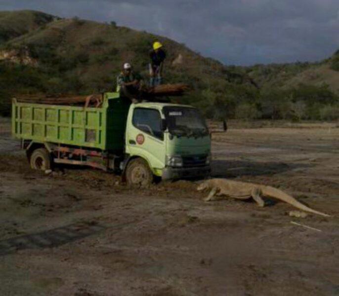 Viral Foto Komodo Mengadang Truk, Berikut Fakta Pulau Komodo yang Jarang Diketahui