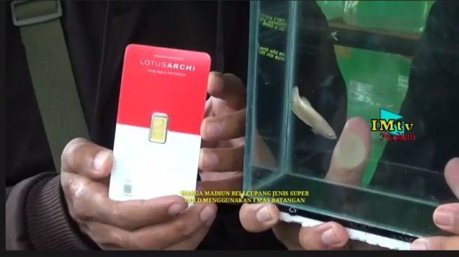 Wow! Pria Ini Rela Tukarkan Emas Batangan dengan Ikan Cupang