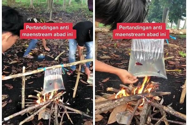 Adu Ikan Cupang di Atas Kobaran Api, Aksi Remaja Ini Tuai Kecaman