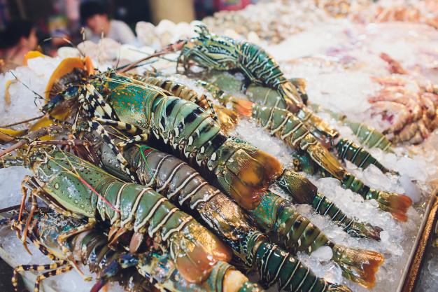 5 Daerah Penghasil Lobster Terbaik di Indonesia