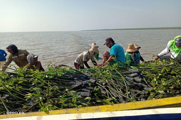 Penanaman Mangrove BPDASHL Solo Diharap Pulihkan Ekosistem Laut