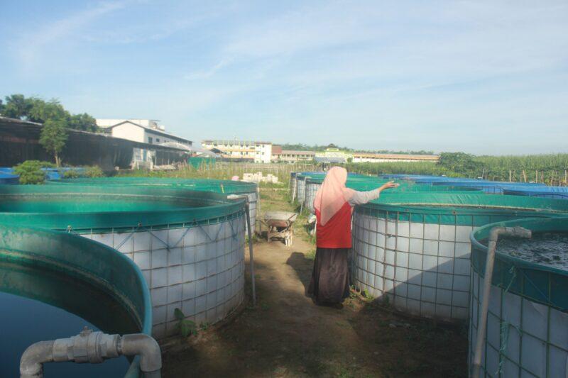 Kelompok Santri Tani Milenial, Upaya Regenerasi Petani di Jombang (Bagian II)