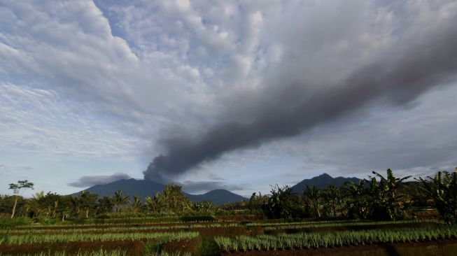 Terpapar Abu Vulkanik Gunung Raung, Puluhan Hewan Ternak di Banyuwangi Sakit