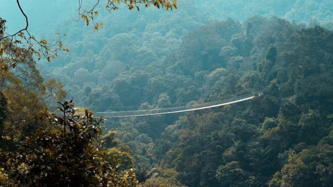 Kisah Warga Hilang 4 Hari Diselamatkan Sosok Misteri di Hutan Banyuwangi