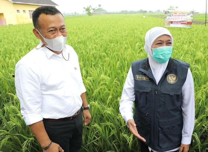 Sugiri Kenalkan Padi KIP, Diklaim Bisa Hasilkan 16 Ton/Hektare