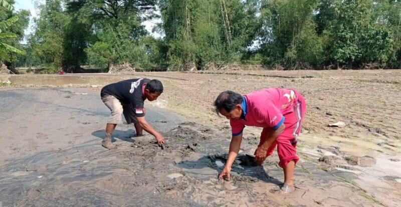 Banjir Bandang di Magetan Rusak Sawah, Petani Merugi