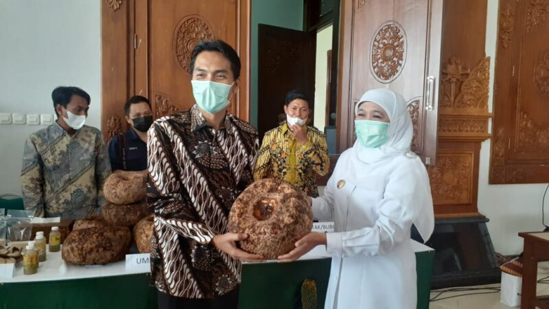 Gubernur Jatim Larang Ekspor Katak Porang
