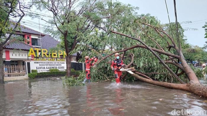 Kediri Dilanda Hujan Lebat Disertai Angin Kencang, Pohon Bertumbangan