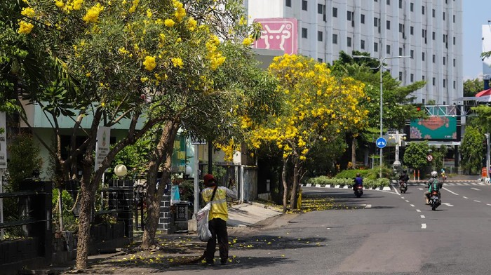 Tabebuya Bermekaran, Surabaya Kian Cantik saat Lebaran 2021