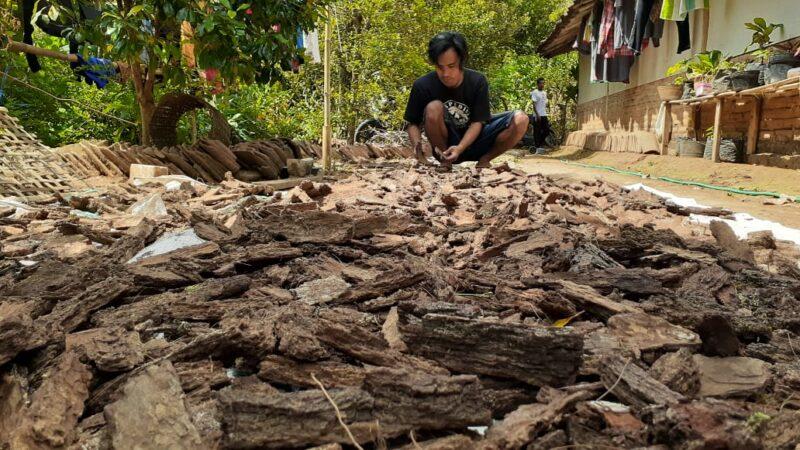 Keren! Kulit Pinus Gunung Wilis Madiun DieksporSampai Filipina